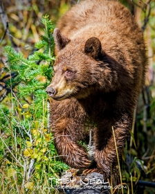 Animals;black-bear;Nature;Outdoor;Outdoors