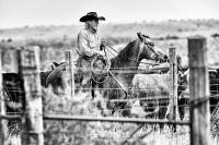 Western & Cowboy Collection