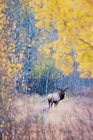 Animals;elk;Outdoors;Nature